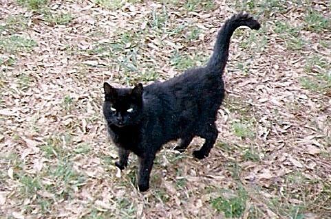 Peeper's last photo. Killed in her own yard.