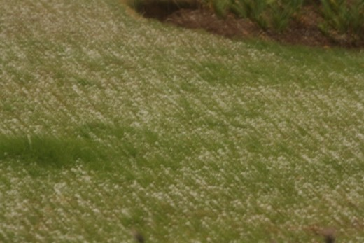 The added blessing of hail, portending good rainfall for our crops.
