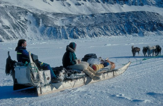 Inuit traveled long distances via dog teams pulling sleds. They moved their hunting finds and families by such methods over the ice and snow.
