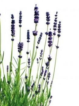 Aromatherapy Criticism | RM.