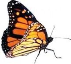 The Jerusalem Monarch Butterfly Celebration 2010