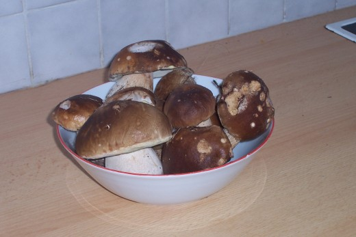 Collection of mushrooms from the forests behind our house-