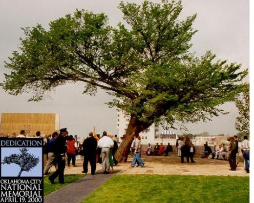 The Survivor Tree at the Oklahoma City National Memorial Dedication.  Badly damaged branches had been previously removed.
