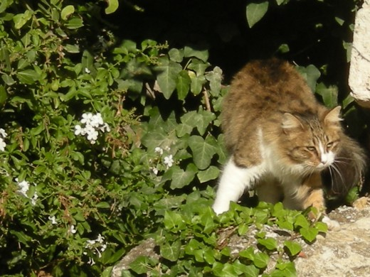 ...and a terribly shy cat!