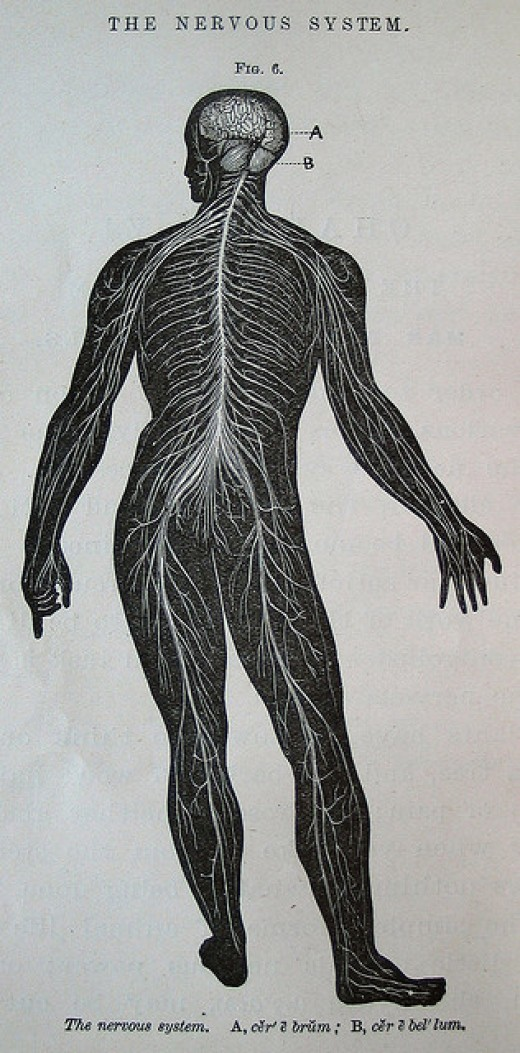 Our Nervous System
