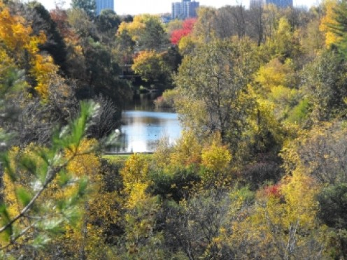 A final glimpse of the Rideau River as it flows, now quietly, towards the Ottawa River