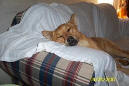 My sleeping dog - Bruno