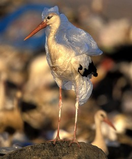 Plastic Bags can cause death to wildlife.