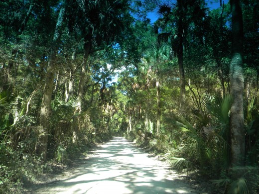 Oyster shell road :Kingsley Plantation