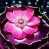 Ohma profile image