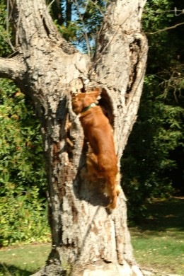 Getting the disc was now becoming second nature to Kal. He would hardly hesitate to jump into that tree.