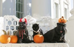 While cute, decorative items can be harmful to pets.  Take caution when placing your decorations around your home.