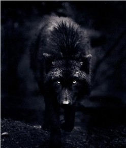 Curse Of A Black Wolf: A Nightmare For 13 Years