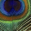 sambaran08 profile image