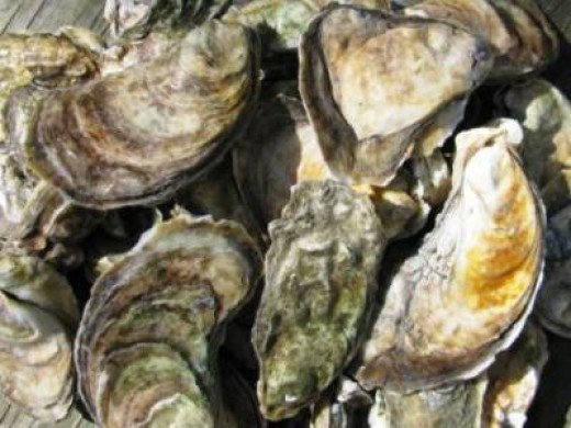 World Famous Chincoteague Salt Oysters