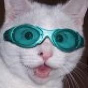 kiwitom profile image