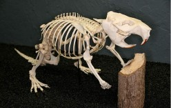 Different types of skeletal systems in animals