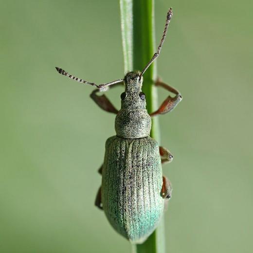 Beetle Exoskeleton