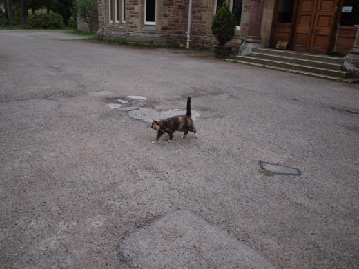Cat, Official Greeter.