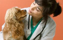 Dog Arthritis Pain Relief