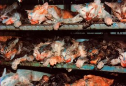 The product of vivisection. These cats were tortured for the sake of household products