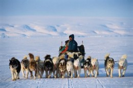 One of the two threats to the Inuit people is global warming that is reducing the ice pack. The other is forced assimilation; this time effected by the killing of their sled dogs.