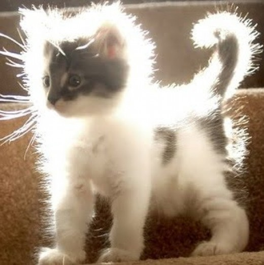 Static electricity on the common cat could save you hundreds of dollars on your light bill every month!