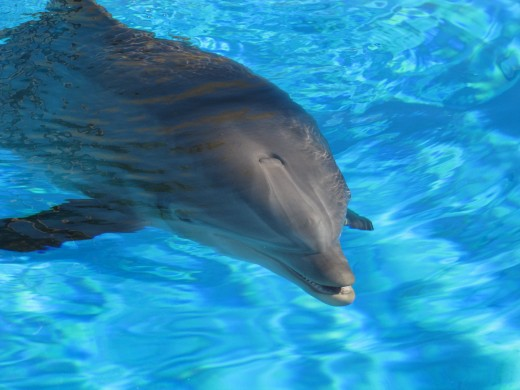 One day I will try to get in the water to join the Dolphins in a swim, one day while in the Ocean.