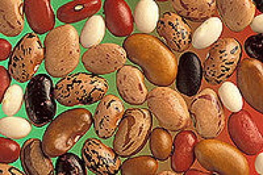 A Variety of Mottled and Pinto Beans