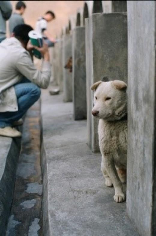 animal cruelty testing. animal cruelty testing.