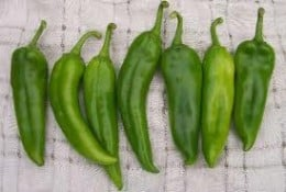 Mild and Friendly, the Anaheim Pepper.