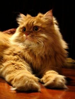 A very regal cat photo!