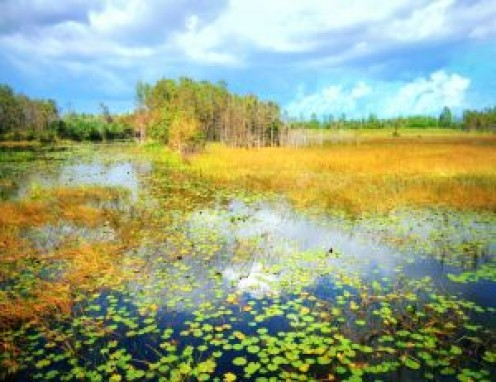 Florida Everglades swamp.