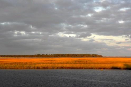 Golden Marsh picture