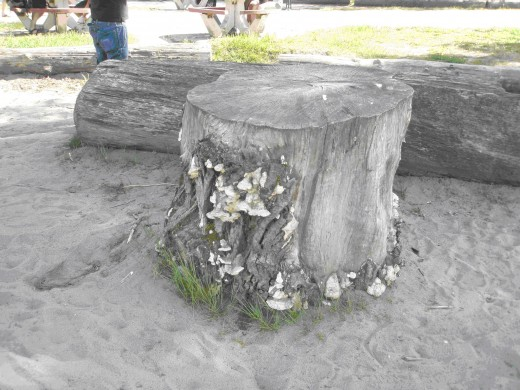 Sand and dead tree trunk abound at one of Vancouver's scenic beaches