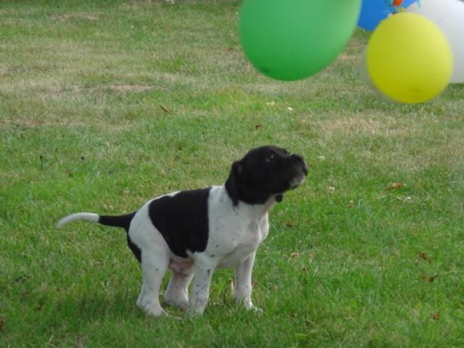 Spot spots the baloons