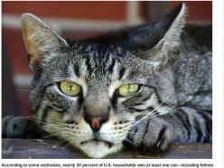 GEORGE THE WHORE CAT...