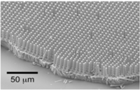 Silicon Nanowire Array