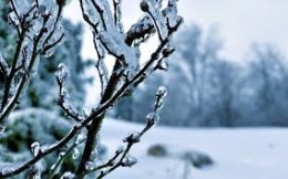 You can protect fruit trees from freezing using a freeze protection thermostat, light bulb and an enclosure.