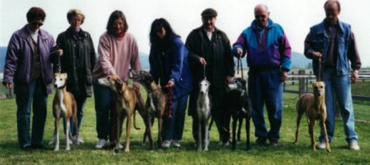 This pictures is around 20 years old, taken while still living in Switzerland (not me personally living there but my spouse). A good example of some of the colors of the Greyhound.