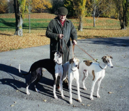 Greyhounds have obviously been a lifetime love of many people. Swiss Greyhounds, surely, well they were born there anyhow.