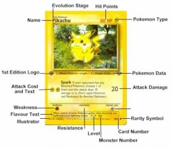Pokémon Card Collecting - An Introduction