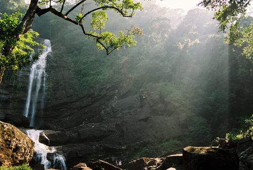 "Light filtering through a canopy of trees surrounding ""Mapalana Ella"" falls, Rathnapura"