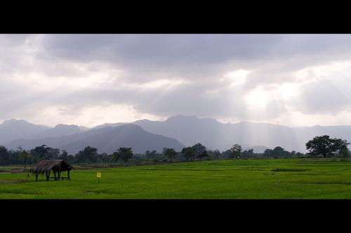 Light filter through the storm clouds gathered above paddy fields - Mahiyanganaya