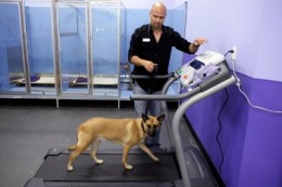 Home treadmill can be for everyone in the family.