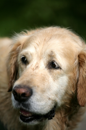 Buying a dog bed for your senior dog