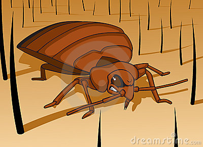 Avoid Bed Bugs before they begin to snack on you!