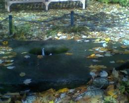 Pliny's Fountain