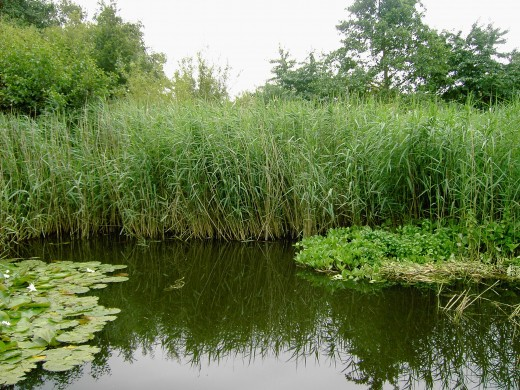 Riparian habitat has been manged so as to encourage wildlife in many areas of the countryside.