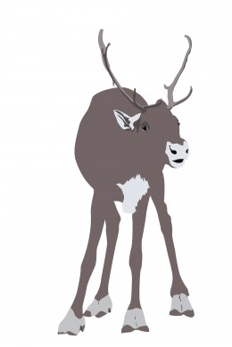 Raindeer used under Rf-LL license